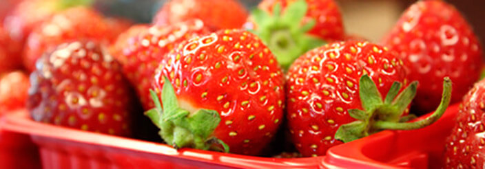 ¿Puedo darle fresas?